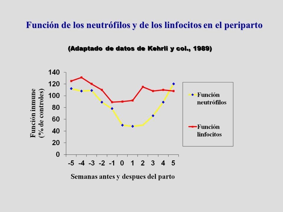 Función de los neutrófilos y de los linfocitos en el periparto