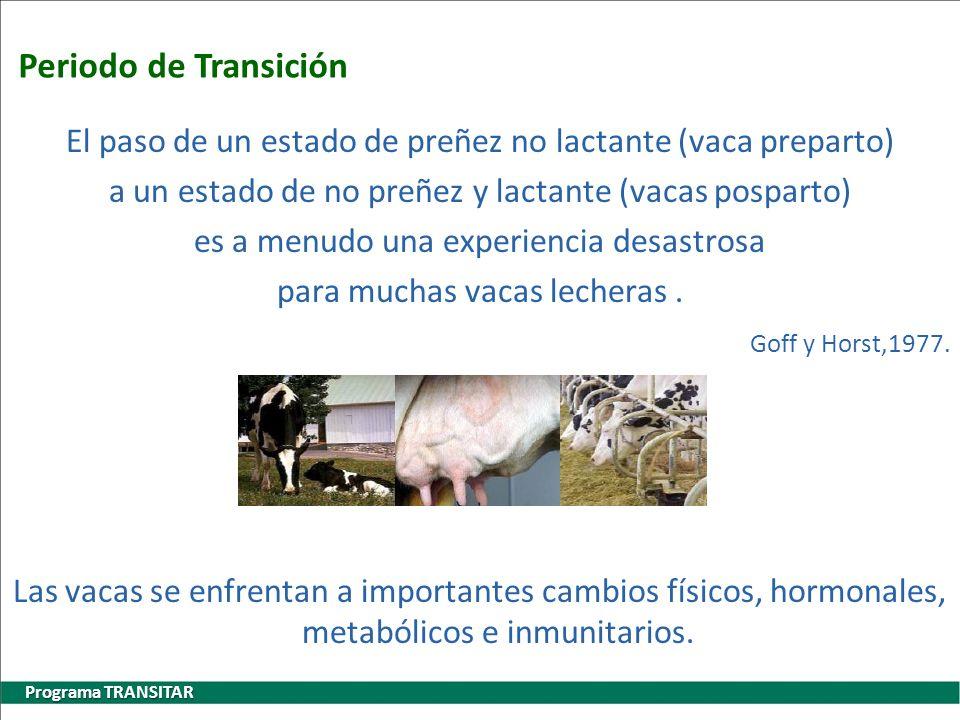 Periodo de Transición El paso de un estado de preñez no lactante (vaca preparto) a un estado de no preñez y lactante (vacas posparto)