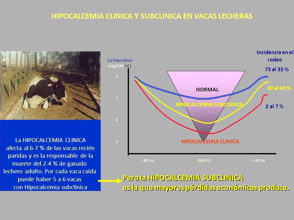 HIPOCALCEMIA CLINICA Y SUBCLINICA EN VACAS LECHERAS