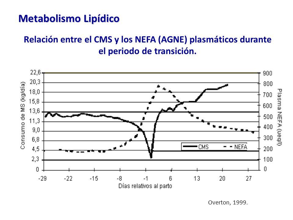 Metabolismo Lipídico Relación entre el CMS y los NEFA (AGNE) plasmáticos durante el periodo de transición.
