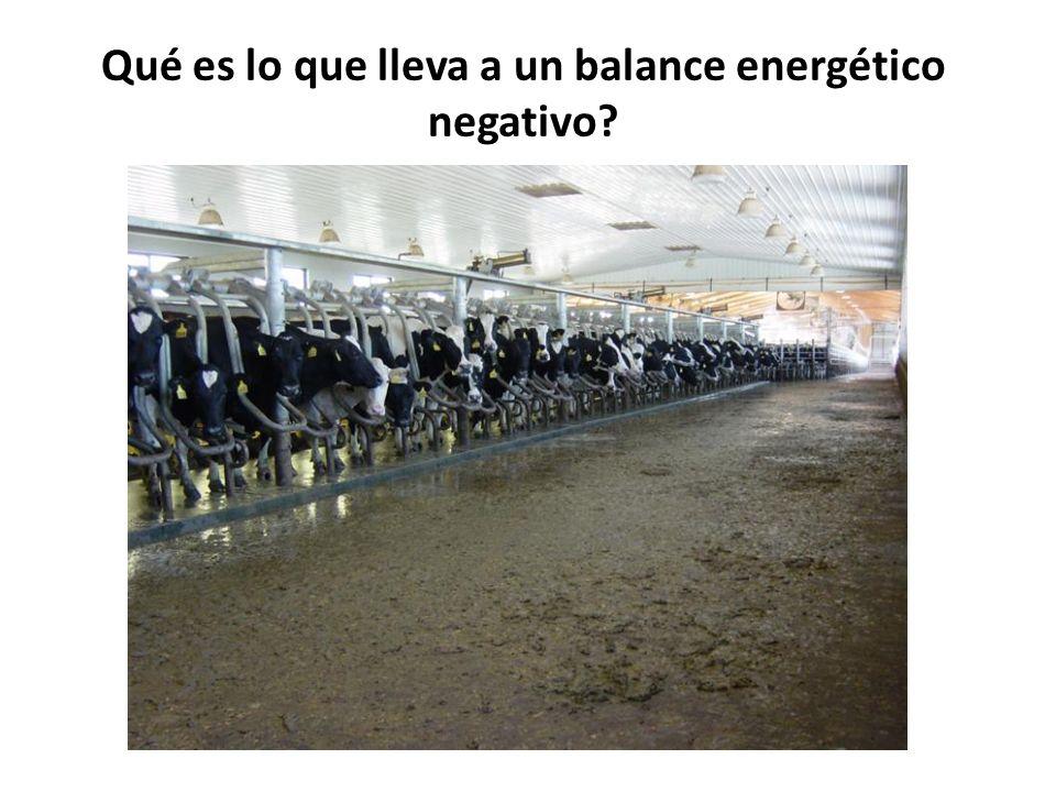 Qué es lo que lleva a un balance energético negativo