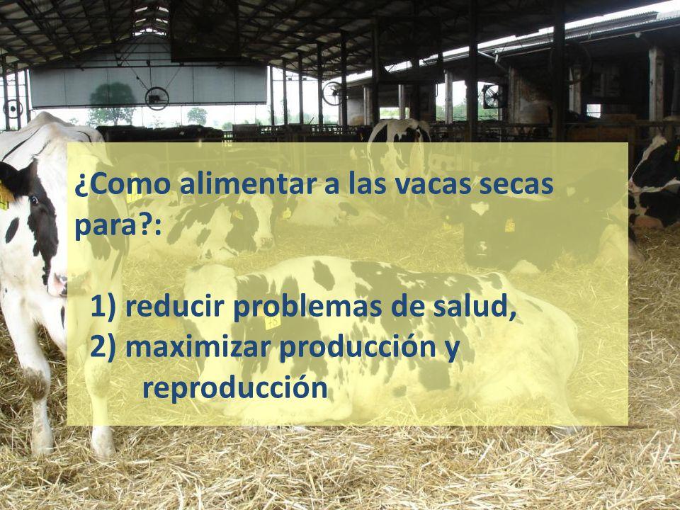 ¿Como alimentar a las vacas secas para