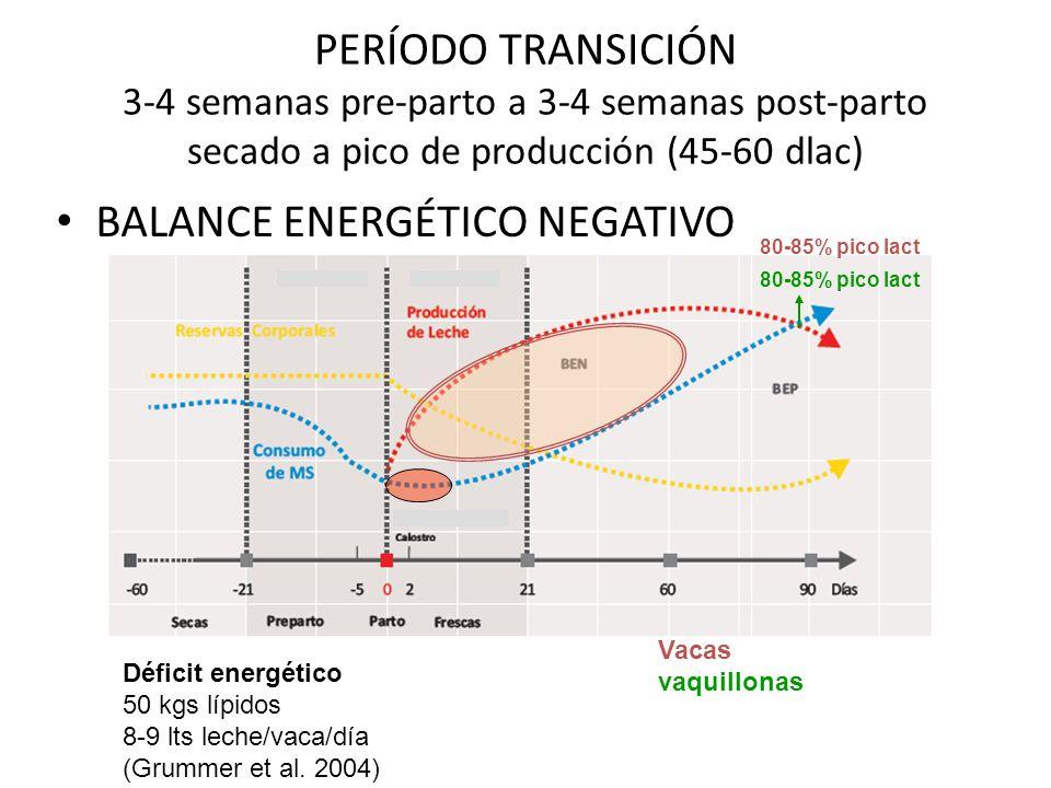 BALANCE ENERGÉTICO NEGATIVO