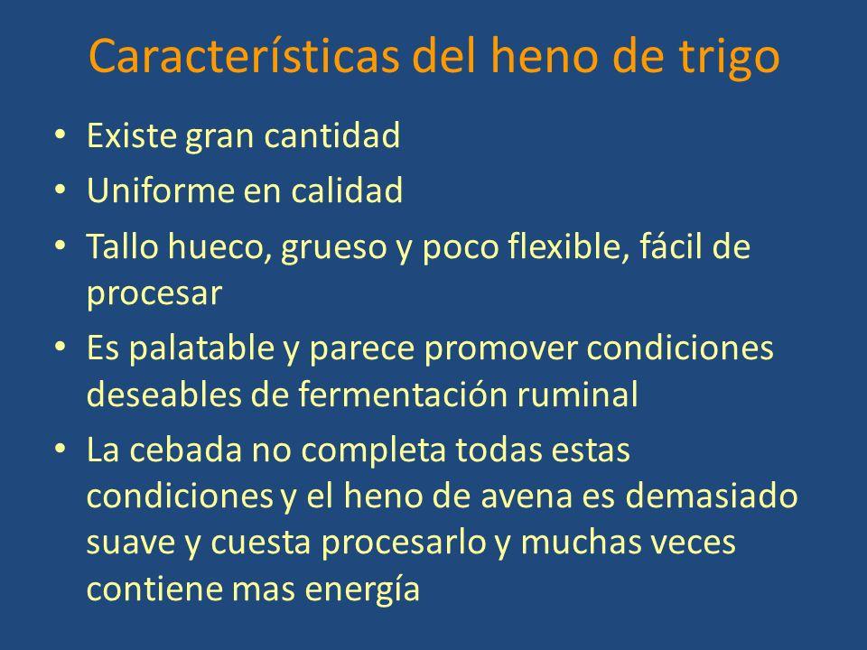Características del heno de trigo