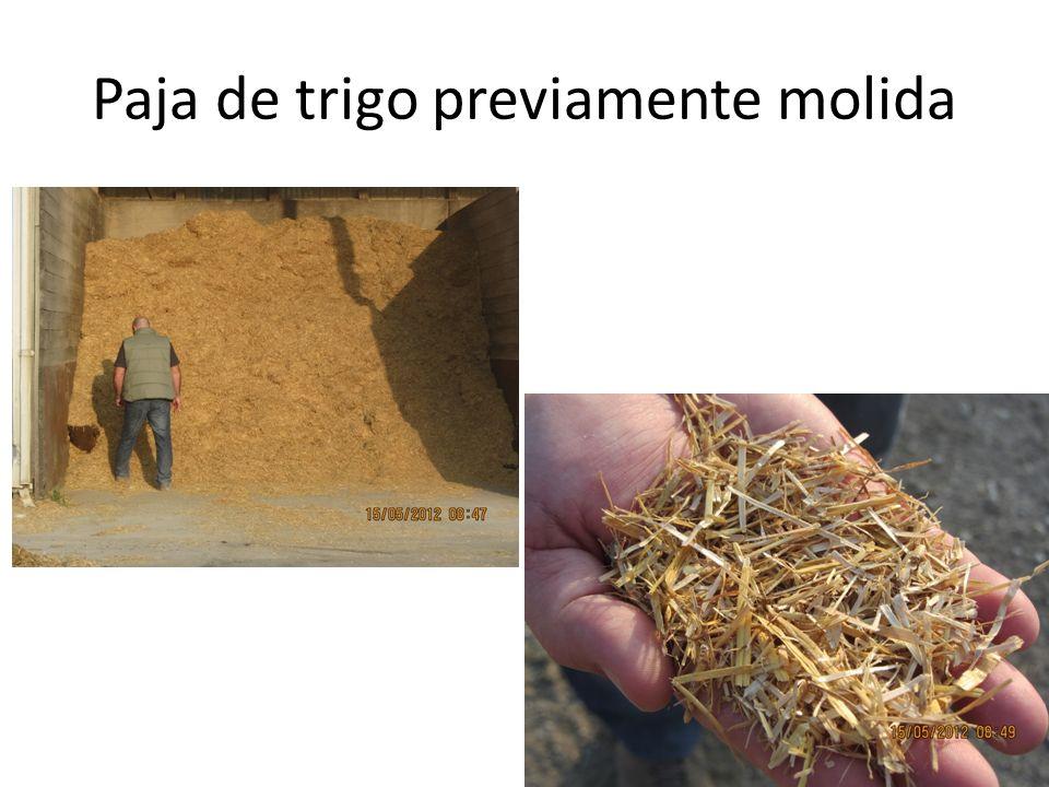 Paja de trigo previamente molida