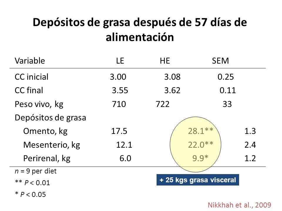 Depósitos de grasa después de 57 días de alimentación