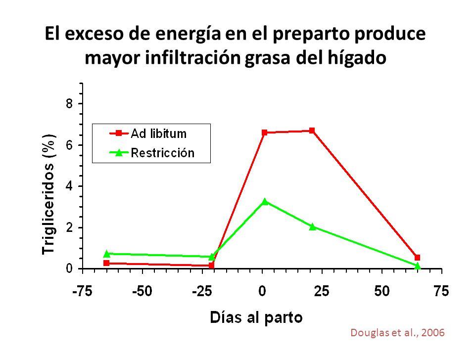 El exceso de energía en el preparto produce mayor infiltración grasa del hígado