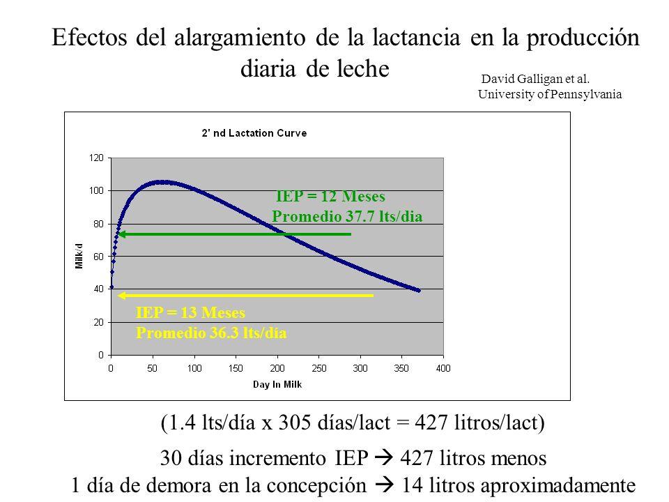 Efectos del alargamiento de la lactancia en la producción