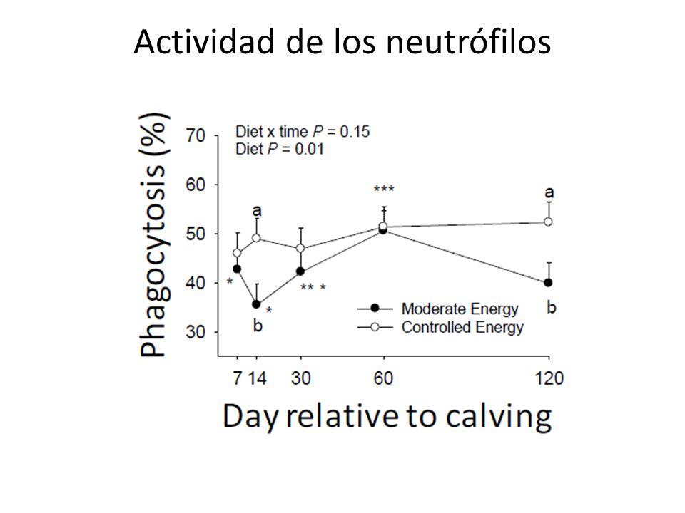 Actividad de los neutrófilos