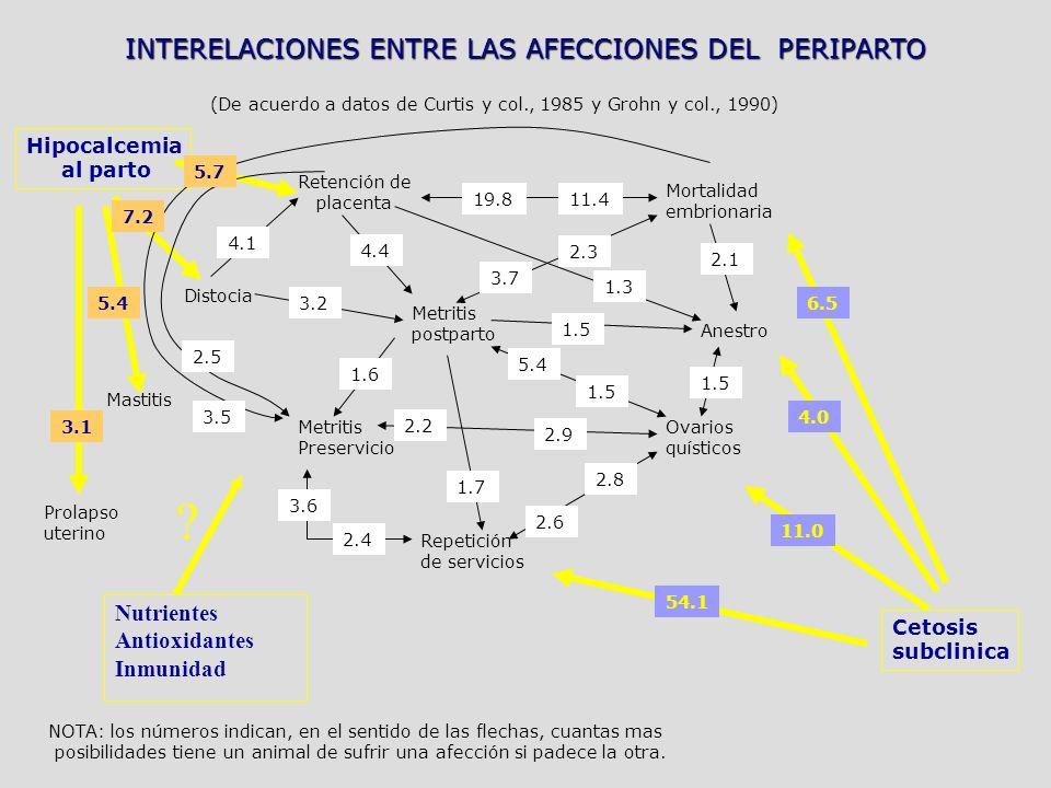 INTERELACIONES ENTRE LAS AFECCIONES DEL PERIPARTO