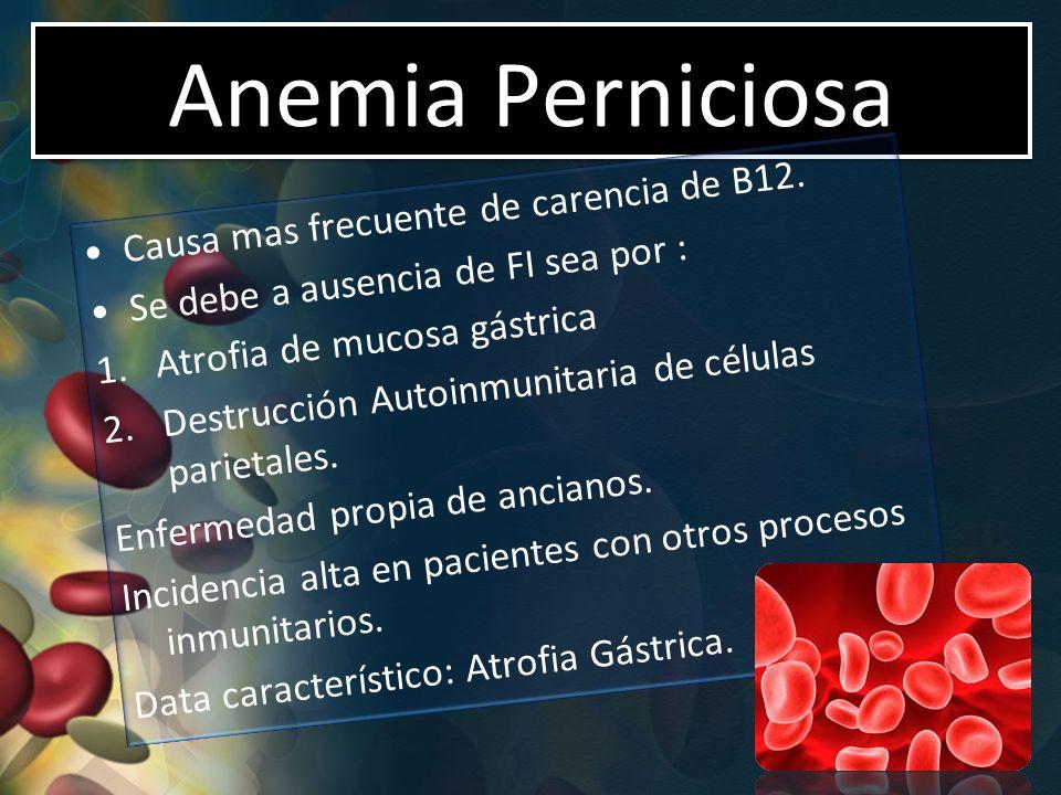 Anemia Perniciosa Causa mas frecuente de carencia de B12.