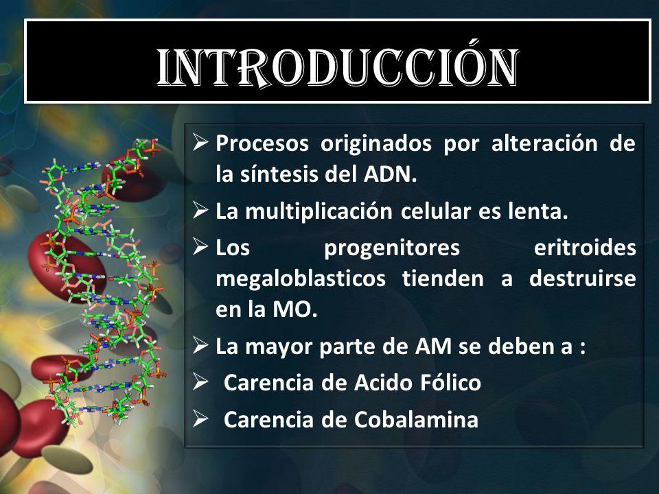 Introducción Procesos originados por alteración de la síntesis del ADN. La multiplicación celular es lenta.