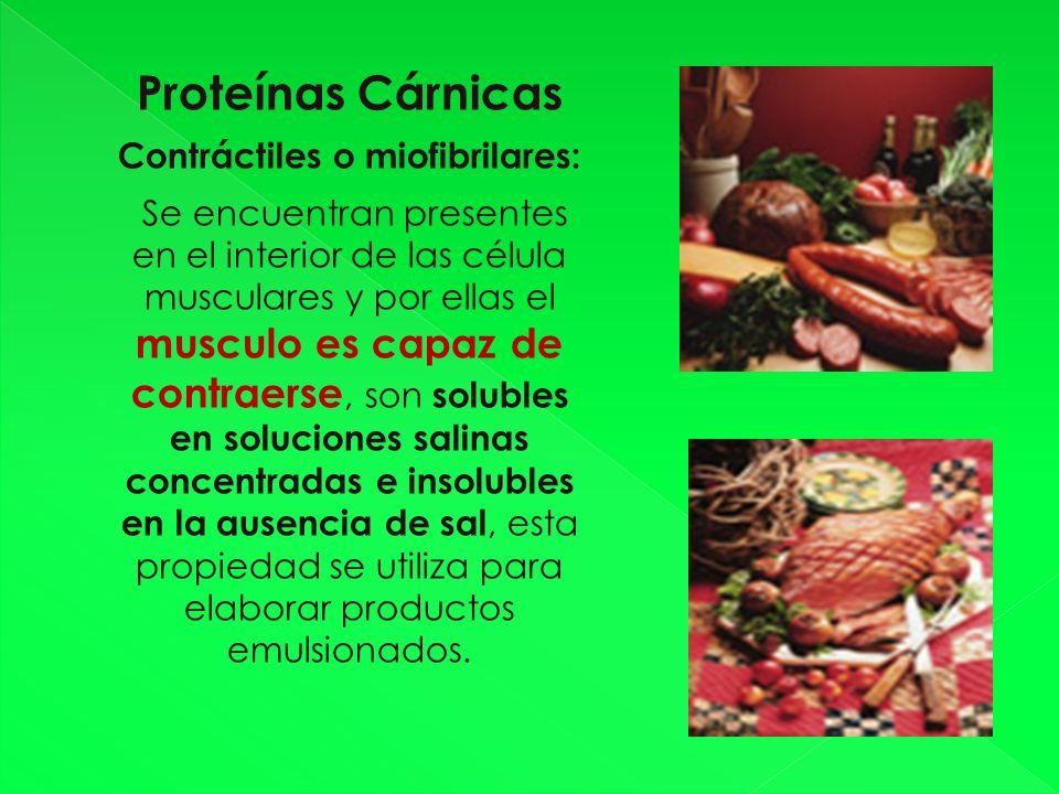 Contráctiles o miofibrilares:
