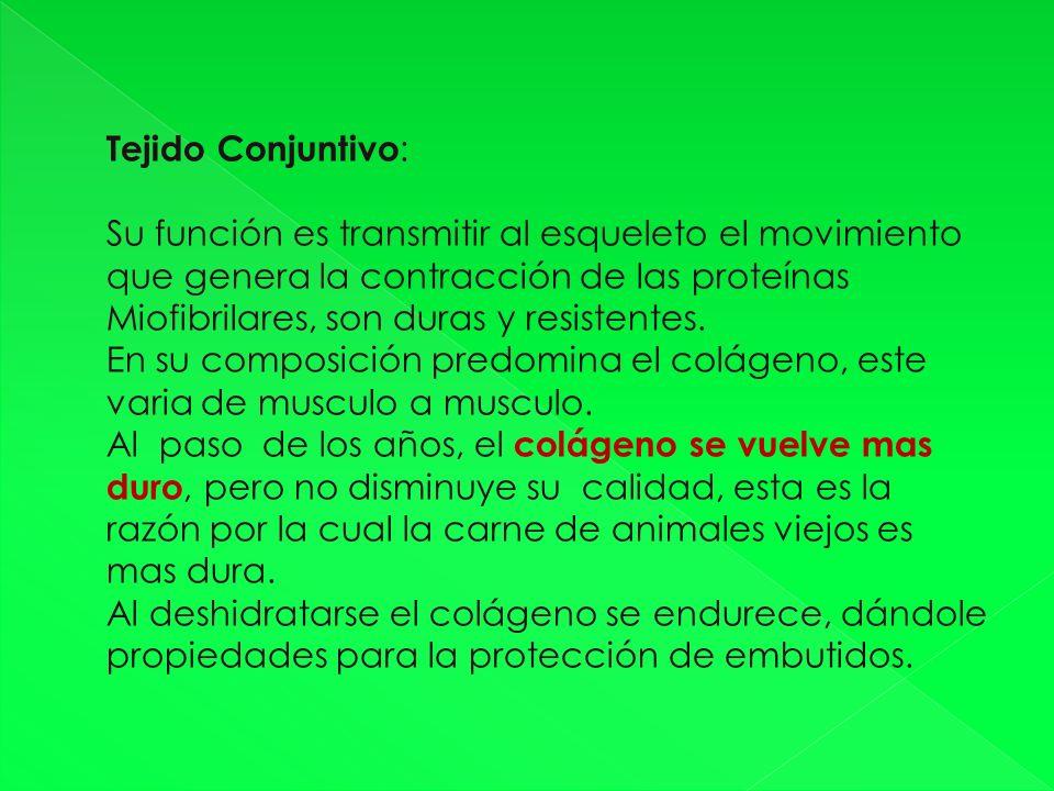 Tejido Conjuntivo: