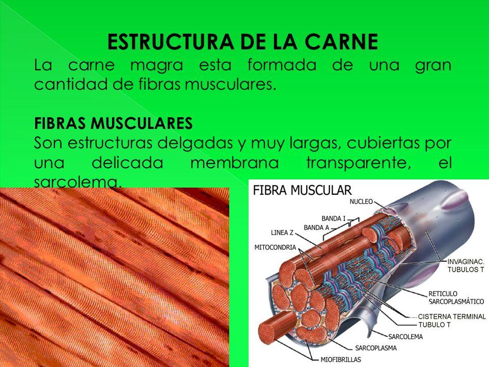 ESTRUCTURA DE LA CARNE La carne magra esta formada de una gran cantidad de fibras musculares. FIBRAS MUSCULARES.