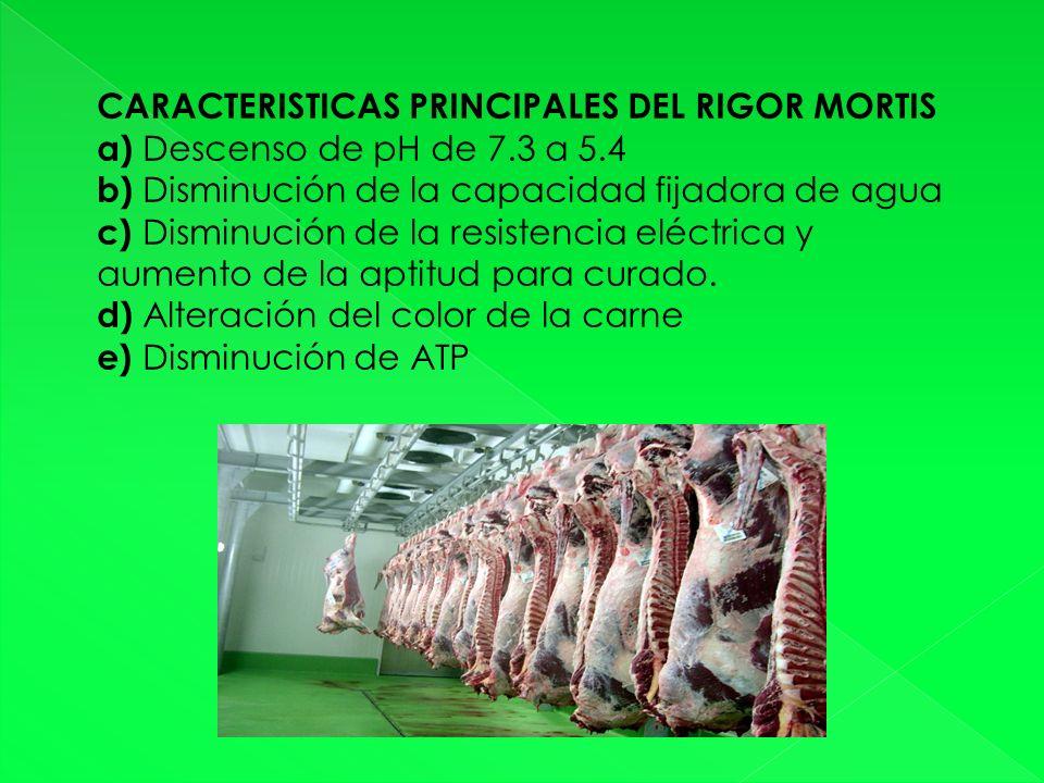 CARACTERISTICAS PRINCIPALES DEL RIGOR MORTIS