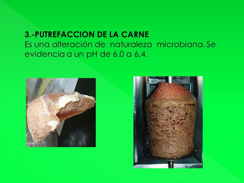 3.-PUTREFACCION DE LA CARNE