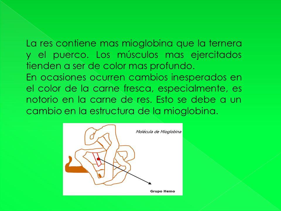 La res contiene mas mioglobina que la ternera y el puerco