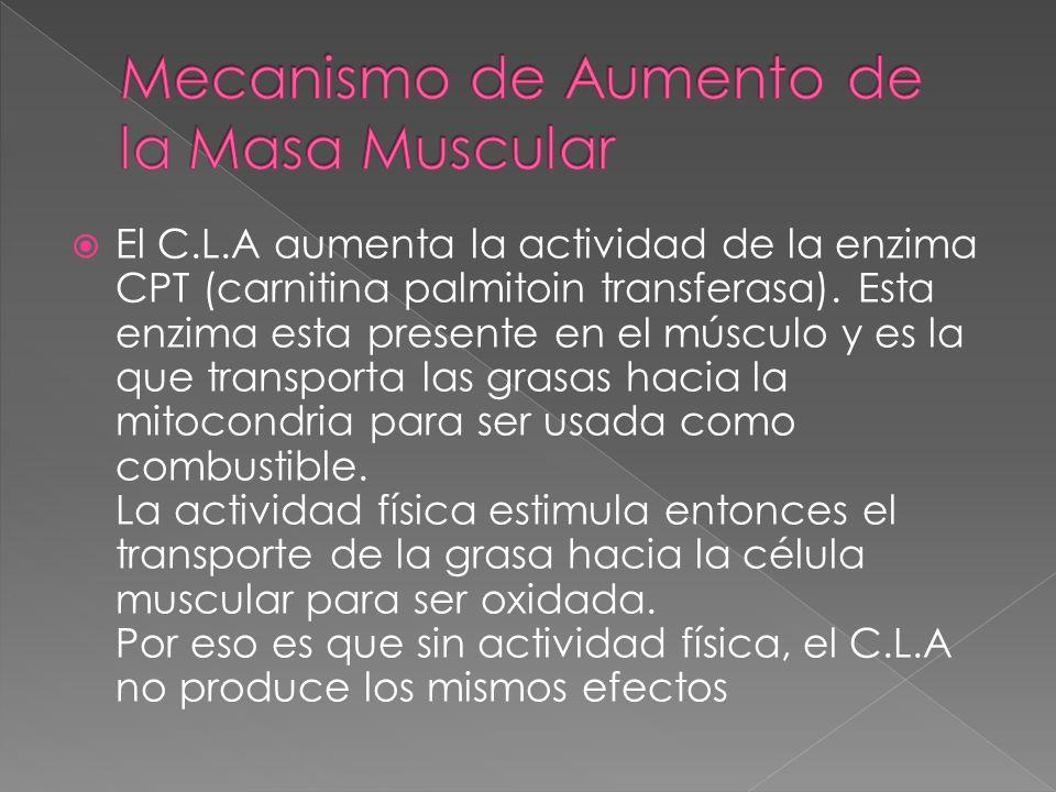 Mecanismo de Aumento de la Masa Muscular