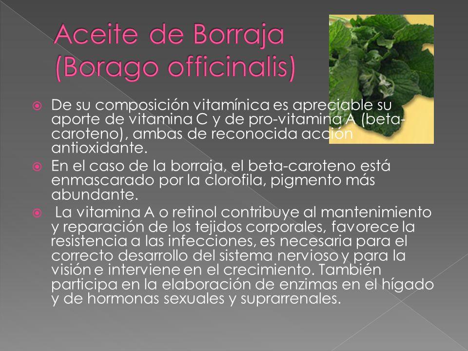 Aceite de Borraja (Borago officinalis)