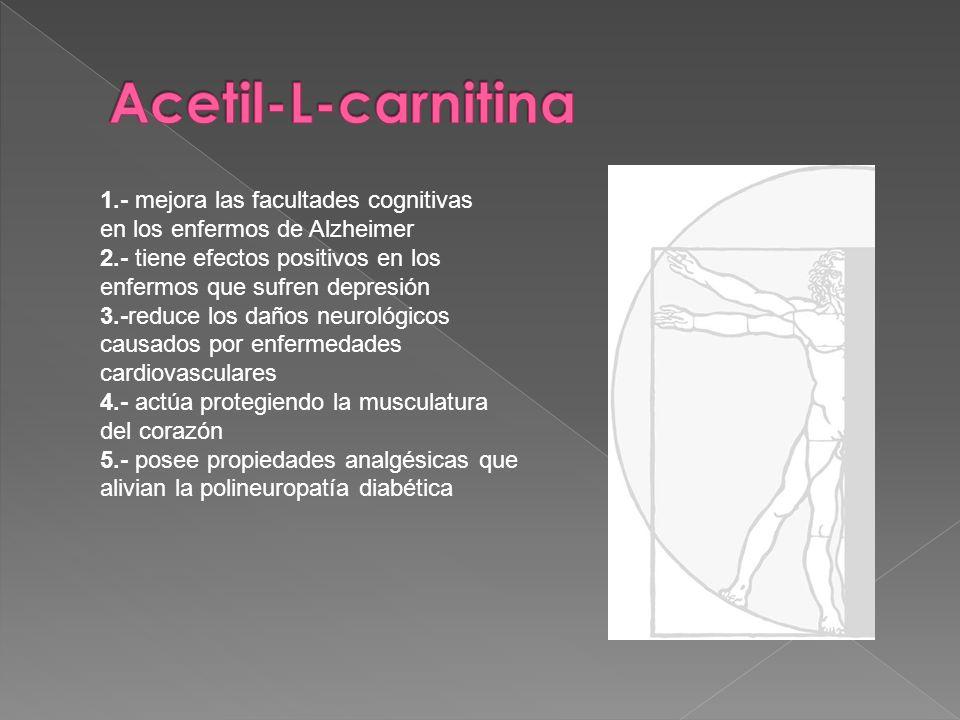 Acetil-L-carnitina 1.- mejora las facultades cognitivas