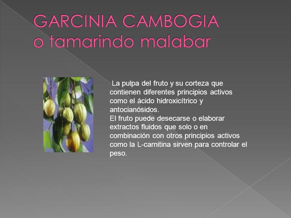 GARCINIA CAMBOGIA o tamarindo malabar
