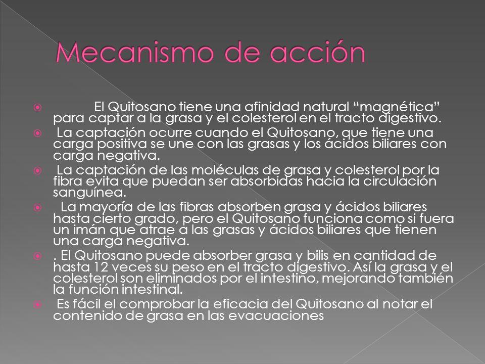Mecanismo de acción El Quitosano tiene una afinidad natural magnética para captar a la grasa y el colesterol en el tracto digestivo.