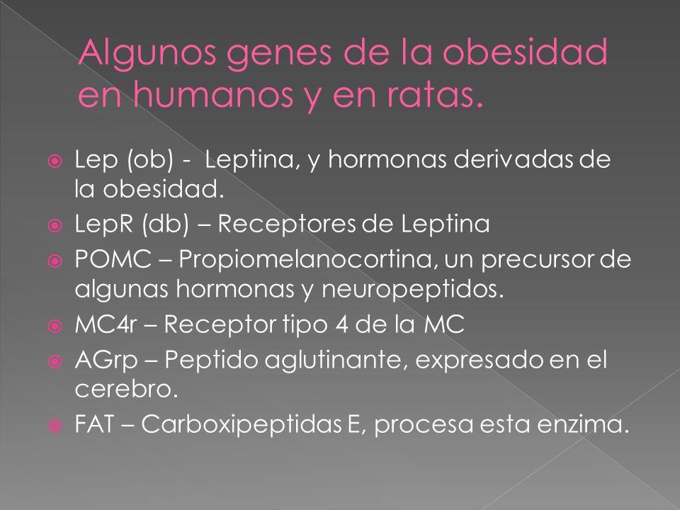Algunos genes de la obesidad en humanos y en ratas.