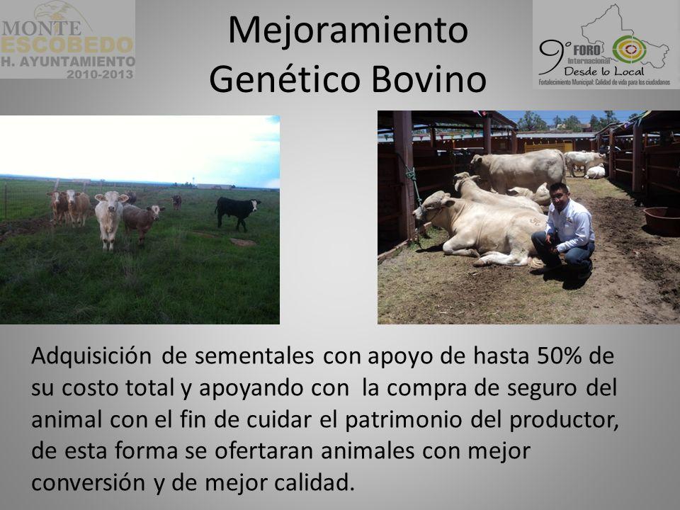 Mejoramiento Genético Bovino