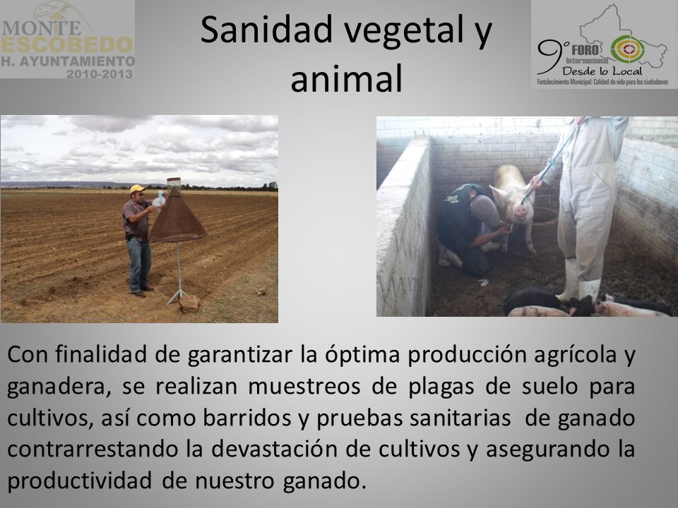 Sanidad vegetal y animal