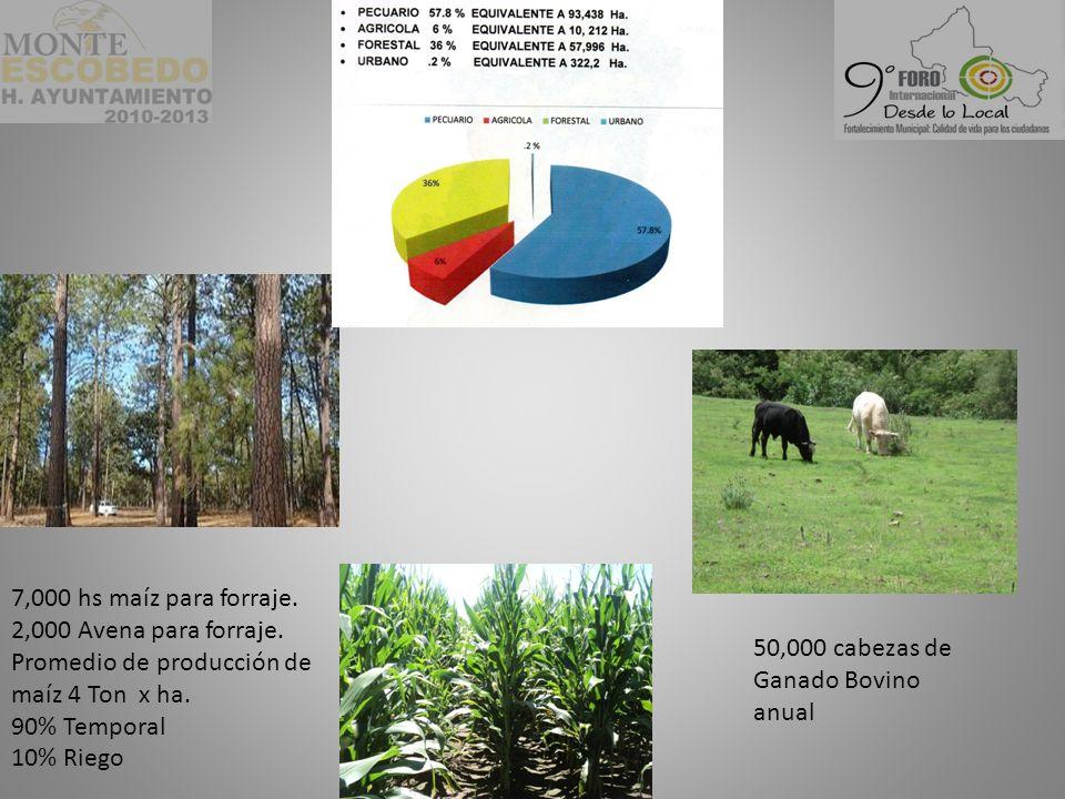 7,000 hs maíz para forraje. 2,000 Avena para forraje. Promedio de producción de maíz 4 Ton x ha.