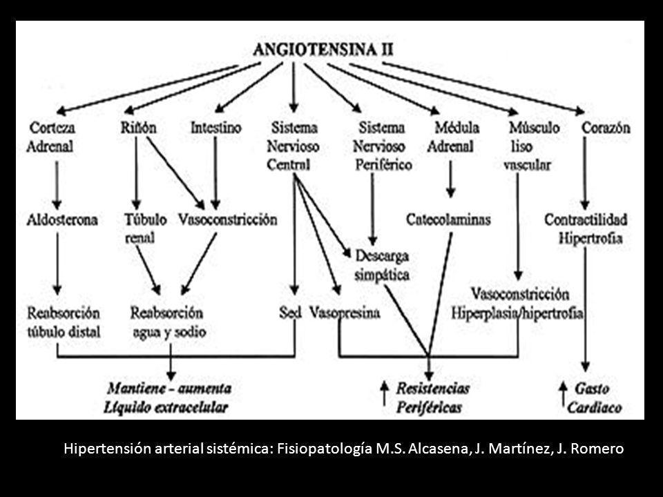 Hipertensión arterial sistémica: Fisiopatología M. S. Alcasena, J