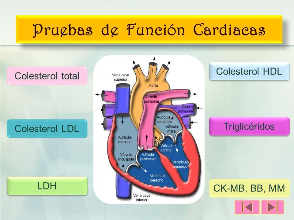 Pruebas de Función Cardiacas