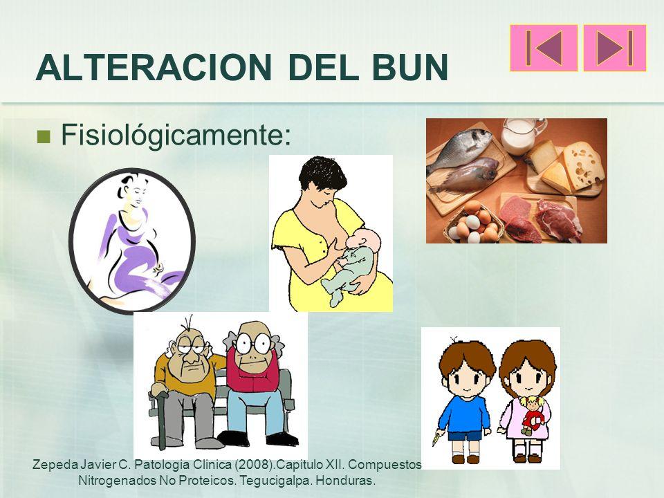 ALTERACION DEL BUN Fisiológicamente: