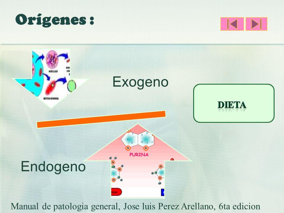 Orígenes : Exogeno Endogeno Dieta