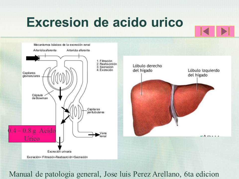Excresion de acido urico