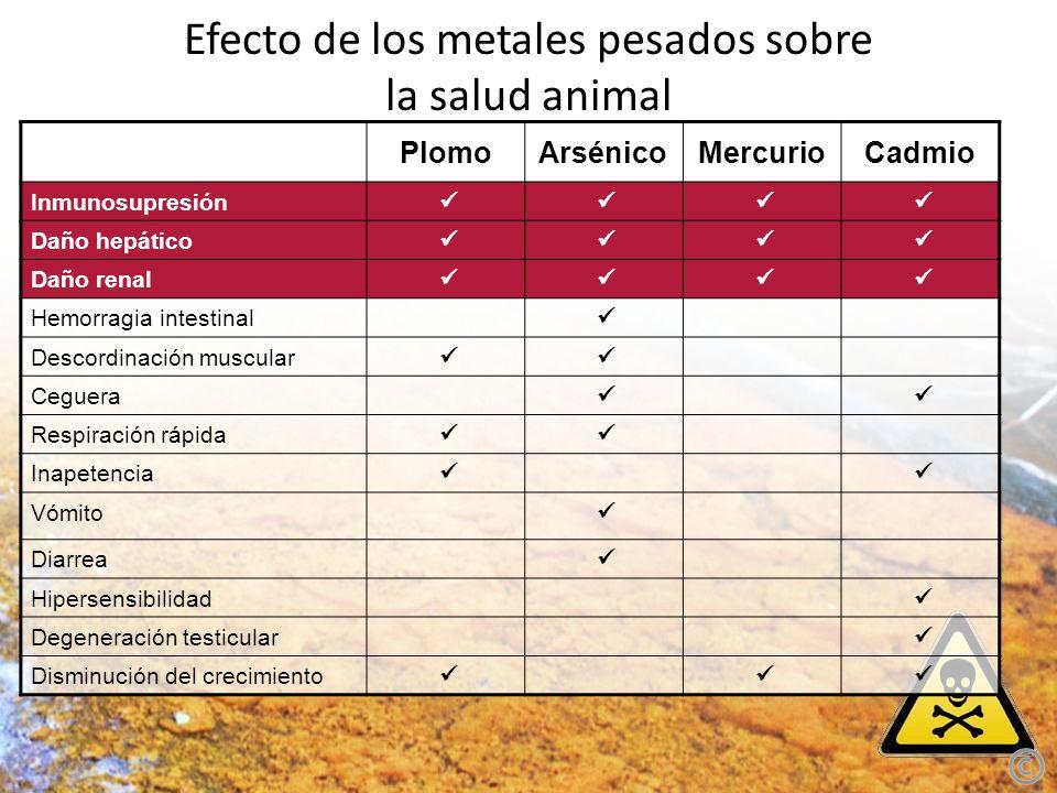 Efecto de los metales pesados sobre la salud animal