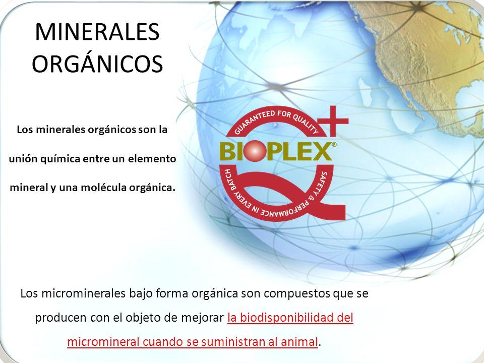 MINERALES ORGÁNICOS Los minerales orgánicos son la unión química entre un elemento mineral y una molécula orgánica.