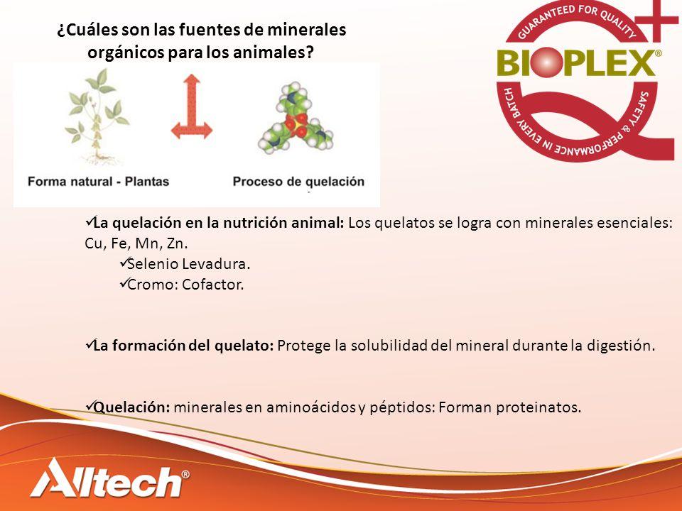 ¿Cuáles son las fuentes de minerales orgánicos para los animales