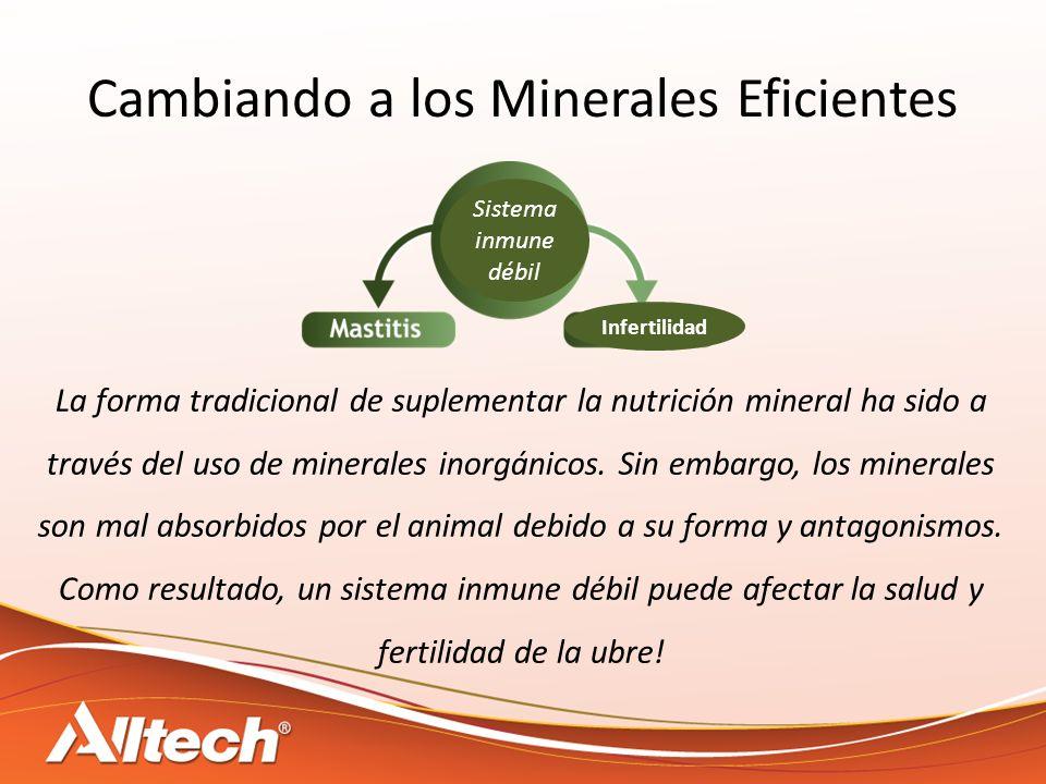 Cambiando a los Minerales Eficientes