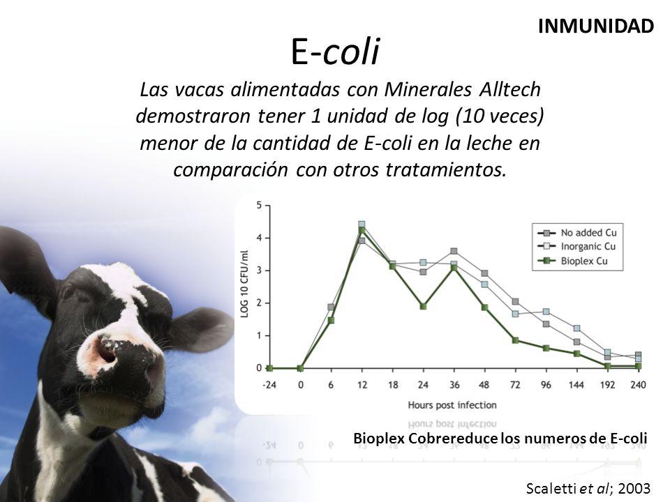 E-coli INMUNIDAD.