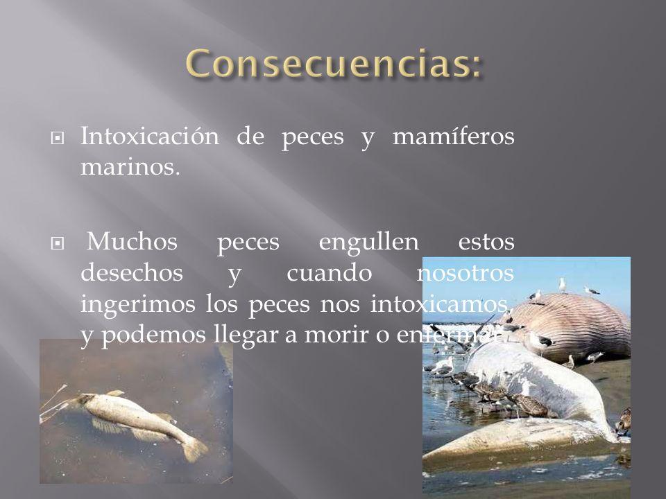 Consecuencias: Intoxicación de peces y mamíferos marinos.