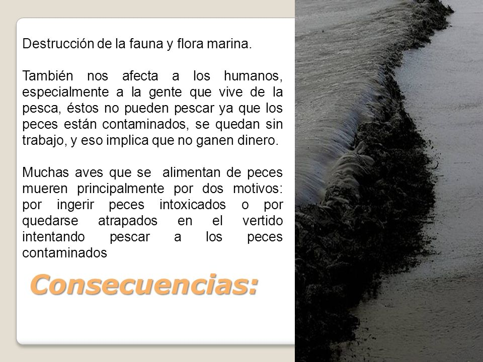 Consecuencias: Destrucción de la fauna y flora marina.
