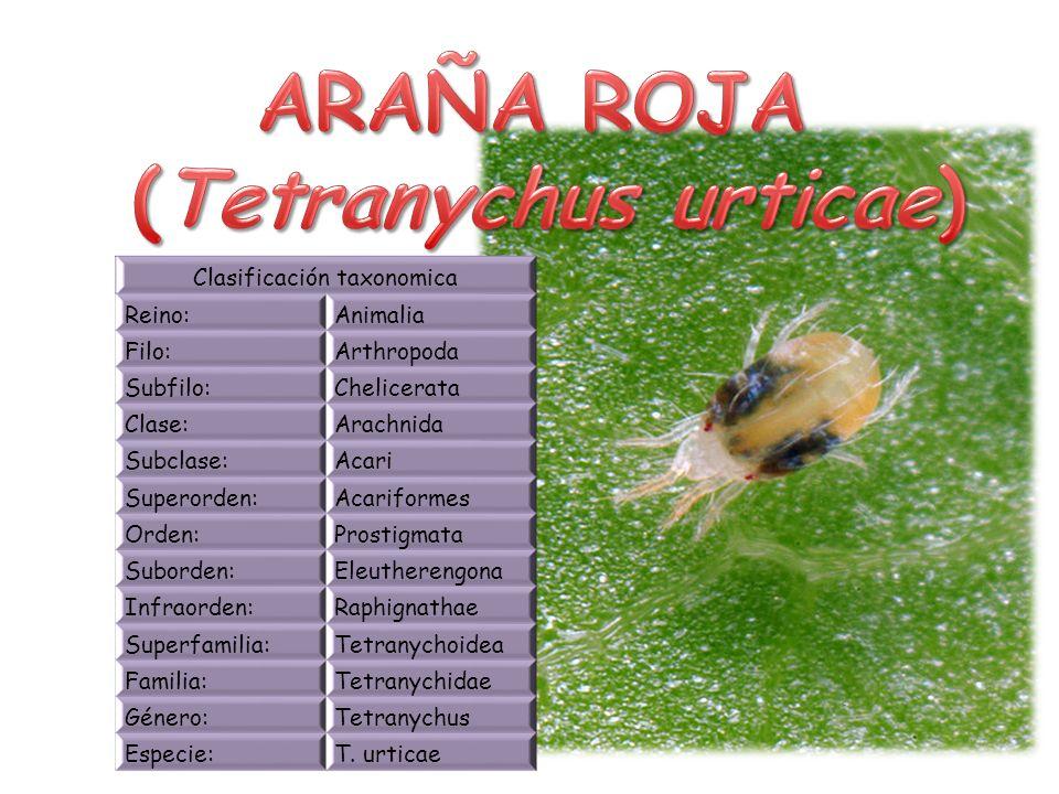 (Tetranychus urticae)