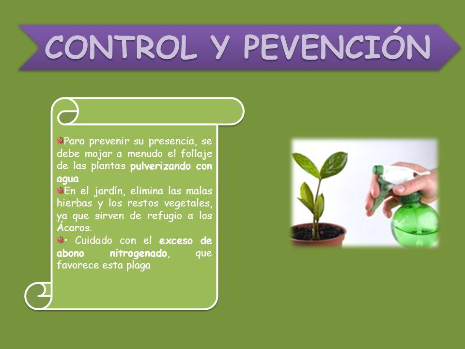 CONTROL Y PEVENCIÓN Para prevenir su presencia, se debe mojar a menudo el follaje de las plantas pulverizando con agua.