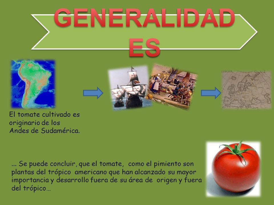 GENERALIDADES El tomate cultivado es originario de los Andes de Sudamérica.