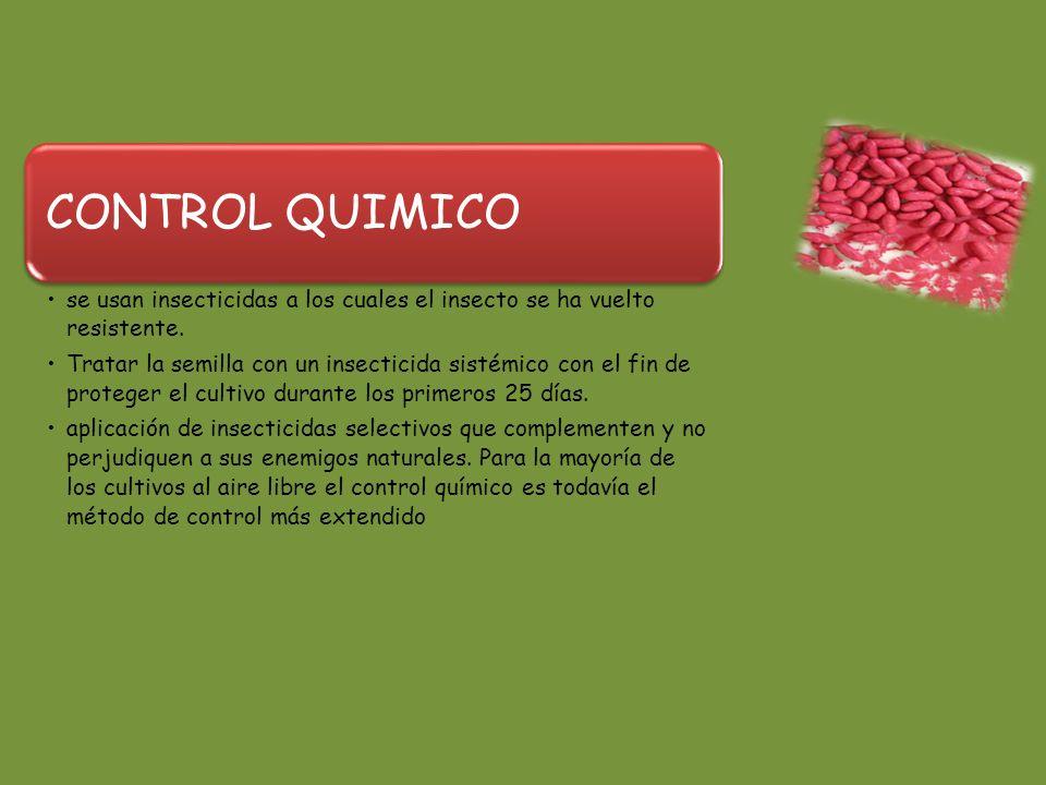 CONTROL QUIMICO se usan insecticidas a los cuales el insecto se ha vuelto resistente.
