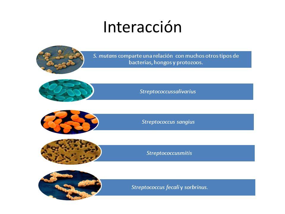 Interacción S. mutans comparte una relación con muchos otros tipos de bacterias, hongos y protozoos.