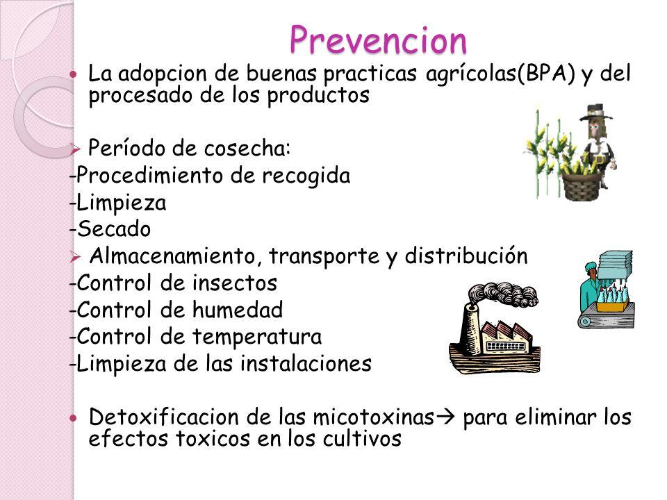 Prevencion La adopcion de buenas practicas agrícolas(BPA) y del procesado de los productos. Período de cosecha:
