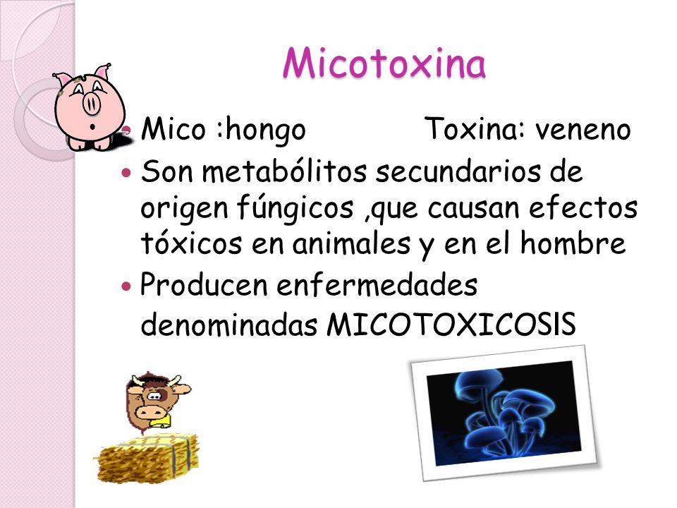 Micotoxina Mico :hongo Toxina: veneno